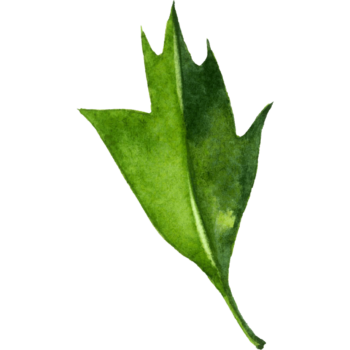 Green Watercolor leaf png transparent
