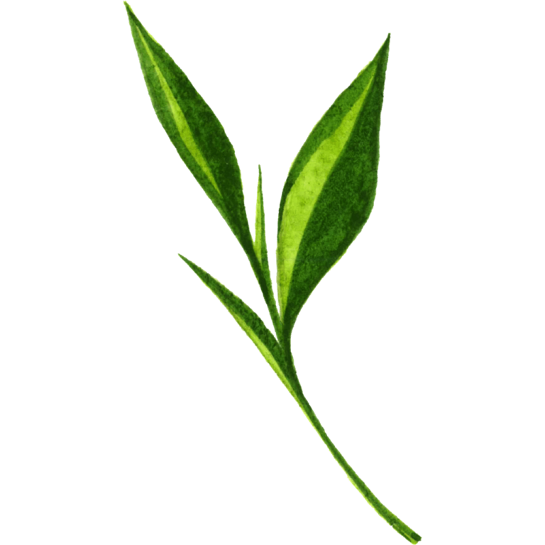 Green watercolor branch png leaf