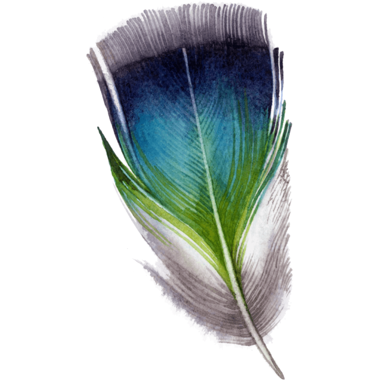 Morpich png feather