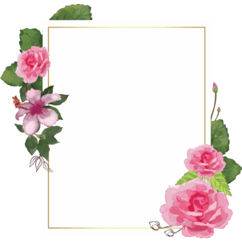 Pink Rose portrait Transparent watercolor floral frame png