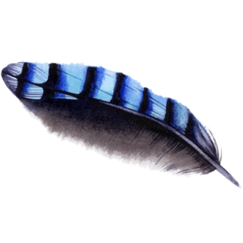Watercolor Feather blue Morpich png