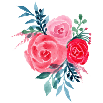 Watercolor blue pink rose flower png