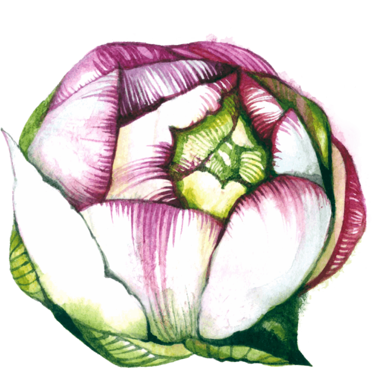 Watercolor flower png images Green Color