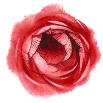 Watercolor flower png images Red color