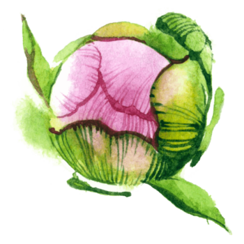Watercolor flower png images green pink color