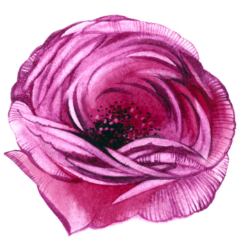Watercolor flower png images rose