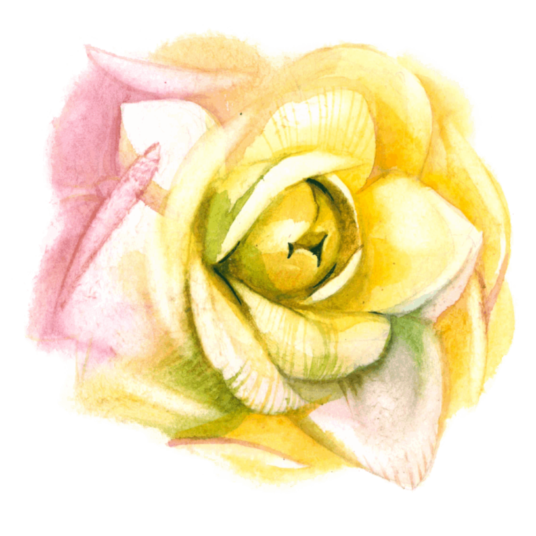 Watercolor flower png images yellow color