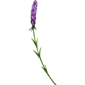 Watercolor herb flower png images