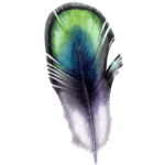 watercolor Morpich feather png