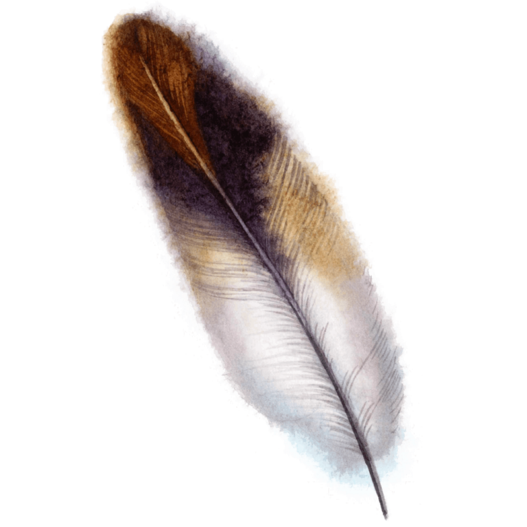 watercolor beautifull png feather