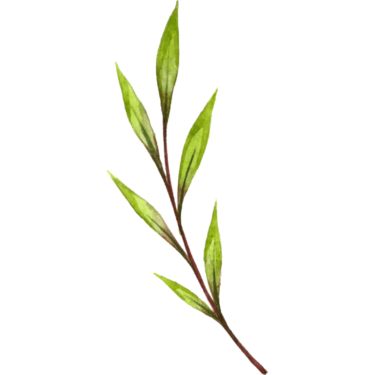 watercolor branch png leaf