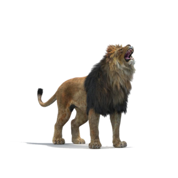 Lion Roar Animation